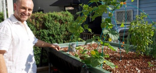 【おうち菜園な人 No.1】「日本アクアポニックス」アラゴンさんが考える循環型農法の可能性