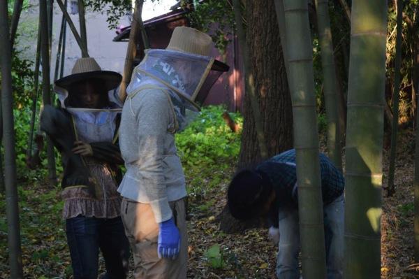養蜂、ミツバチとの対面、防護服