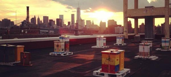 Brooklyn-grange-2