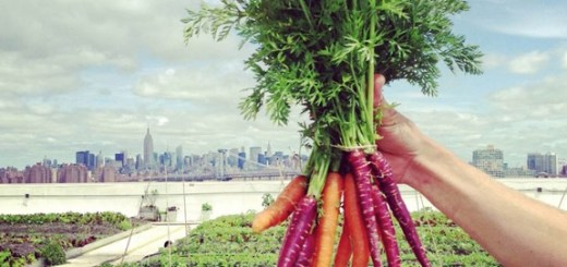 広さ3000坪。農場から養蜂までやっている世界最大の屋上農園「Brooklyn Grange」