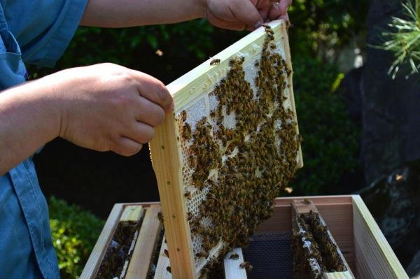 巣蜜用の巣枠
