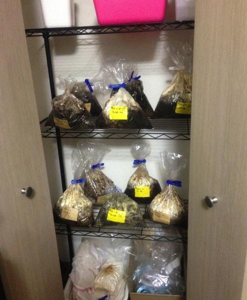 コーヒーでキノコ栽培-2