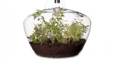 置けないなら吊るせばいい。チェコ生まれのランプ型菜園「Glasshouse」