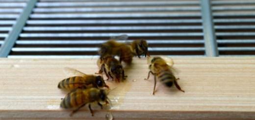 【養蜂・動画あり】巣箱を2段にしてスズメバチを退治しました [おうちの養蜂]
