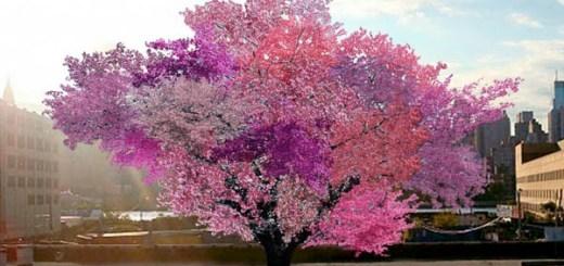 美しいだけじゃない。40種類の実をつける1本の木がアメリカで誕生した理由