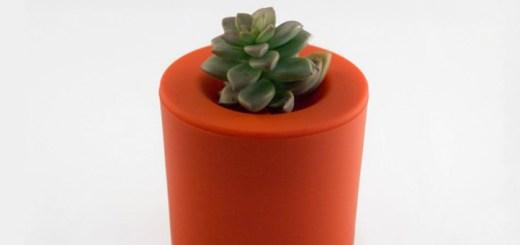 切った植物は、カップに入れて育てよう