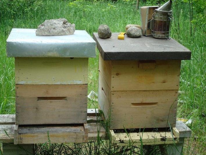 いちごの旬は初夏。それでも私達が冬に食べられる理由ーーミツバチのポリネーション