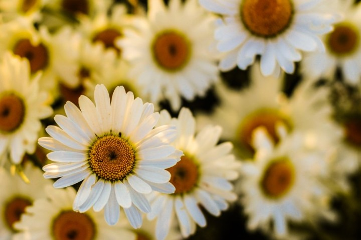 そもそもアロマテラピーとは。経皮吸収することで香りをかぐ以上の効能を