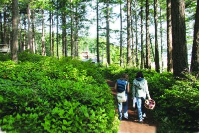 Cortes Island Hiking Trails