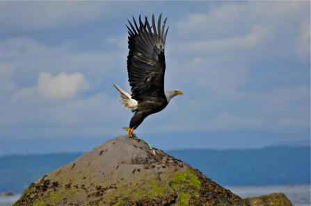 Cortes Island Wildlife