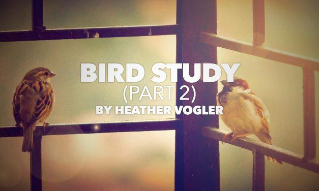 Bird Study – Part 2
