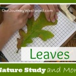 Nature Study – Leaves