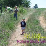 Nature Study – Wildflowers
