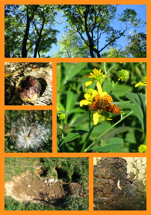 Early fall nature study is full of opportunity!