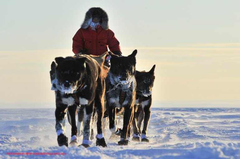 International dog racing from Toliatii to Kazan - Volga Quest. Podgori - Sengeley 110 km