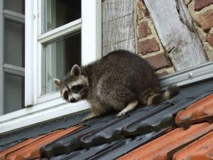 Keeping Wild Animals Out of Your Home In The Winter