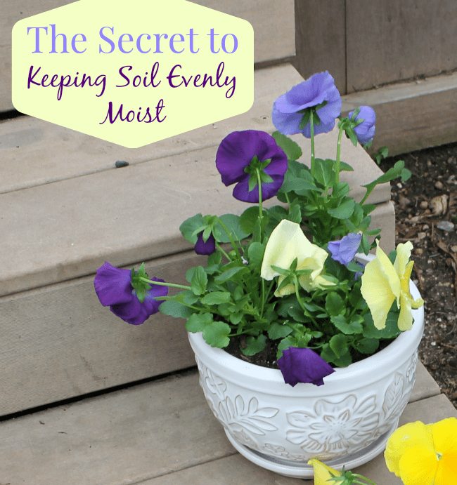 The Secret to Keeping Soil Evenly Moist