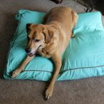 Molly Mutt – A Comforting Bed for Your Pup