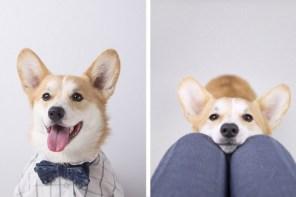 時尚狗兒的名人圈!這些寵物們的 Instagram 追蹤人數是我們無法想像!