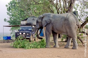 001_Challenging_Your_Dreams_Elephants