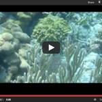 Episode 6 – Snorkeling Belize