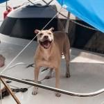 I'm On A Boat (Sitting Gig)!