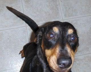 My dog saddest days of my life