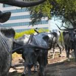 Wanderlust Wednesday – Dallas