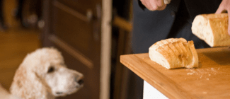 Doggie_wants_some_bread___Flickr_-_Photo_Sharing_