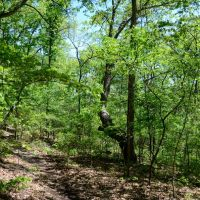 Busiek State Forest and Wildlife Area - Changes to the White Trail