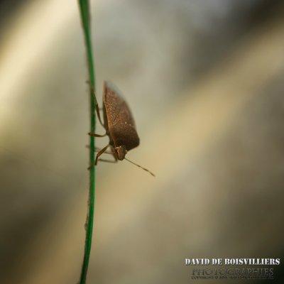 Punaise - Photo de Animaux - DaviddB Ornithographe