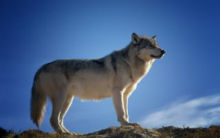 """The Dangers of Being a """"Lone Wolf"""" in Real Estate Investing"""