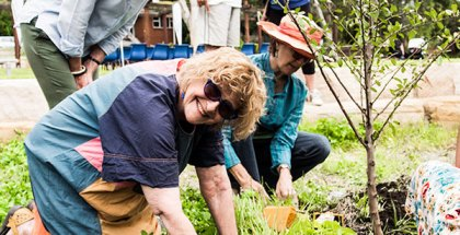 A positive interaction between community and local government — the community orchard project in Leichhardt