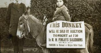 donkey-auction
