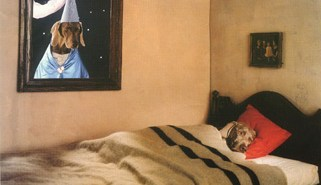 william wegman1