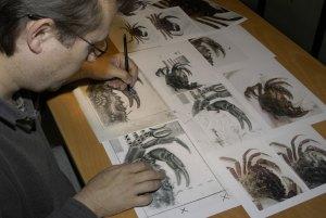 iceland-kronur-crab-drawing