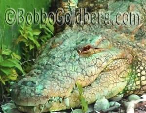 102511_bobbo-goldberg