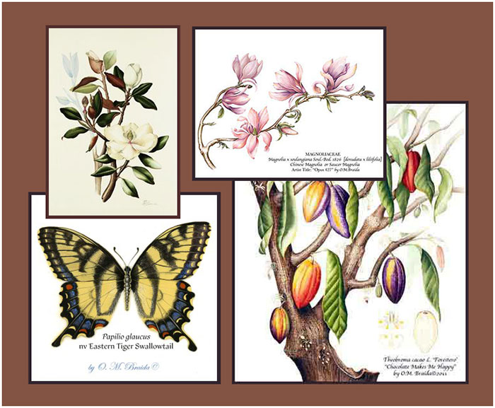 'Botanical Art by Olivia Marie Braida-Chiusano, New York, NY, USA