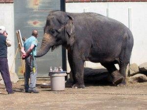 kamala-elephant-painting1