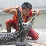 Crocodile Farm and Zoo