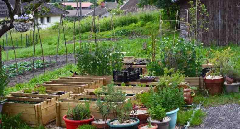 raised bed garden june