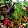 silverbeet RAINBOW-CHARD-300x300