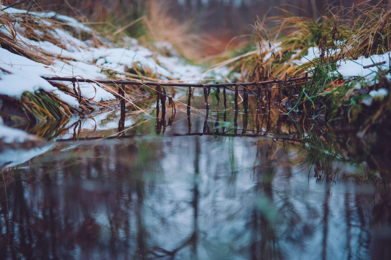 winterwoods 6