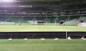 Palmeiras jogará partida de volta da Copa do Brasil fora do Allianz Parque