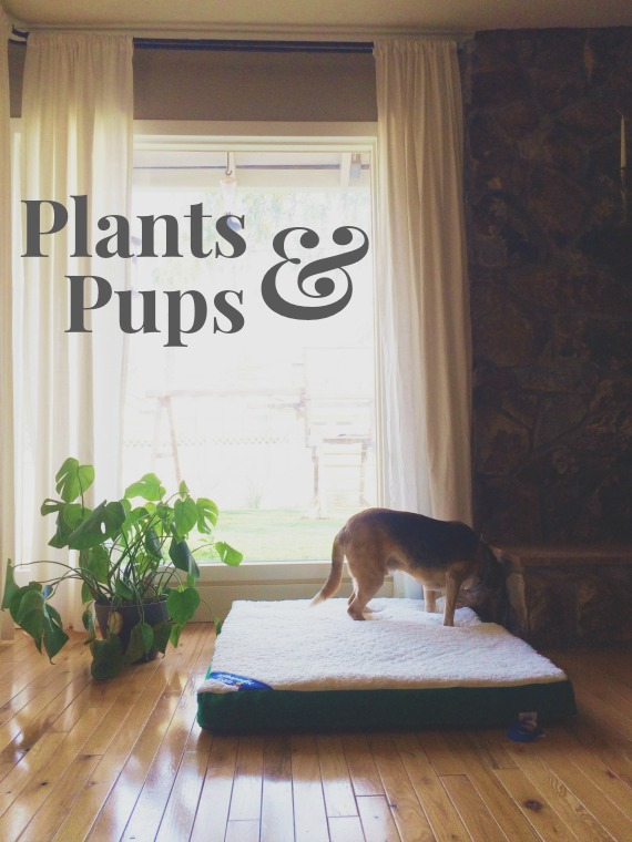 Plants and pups