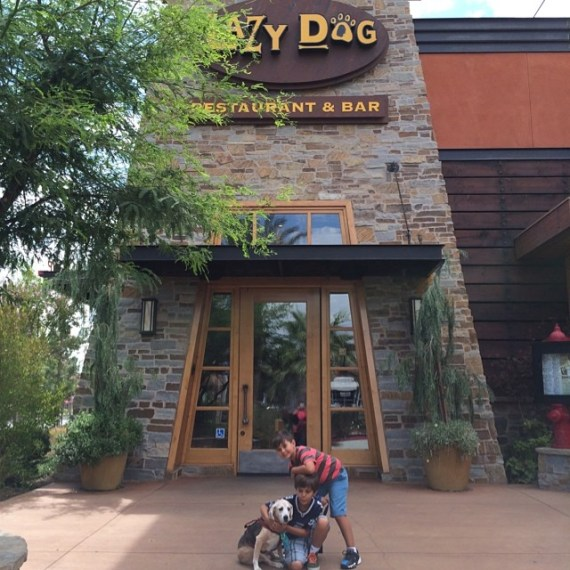 Lazy Dog Cafe