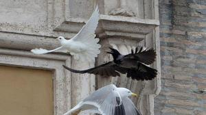 Ataque de cuervo en vaticano