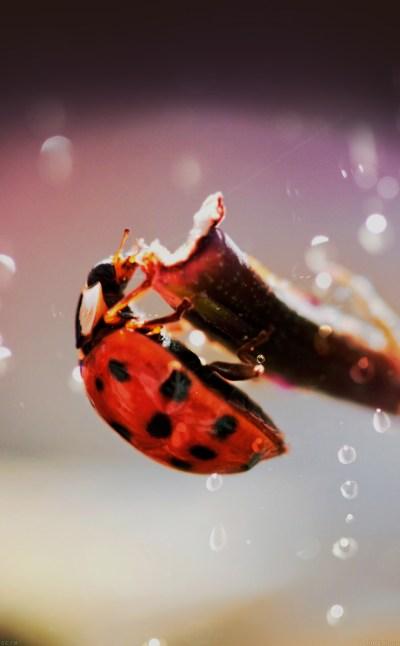 FREEIOS7 | mh99-lady-bug-macro-zoom-animal - parallax HD iPhone iPad wallpaper