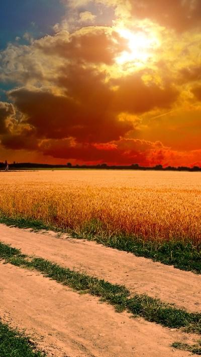ml99-hot-sunny-day-nature-farm-wallpaper