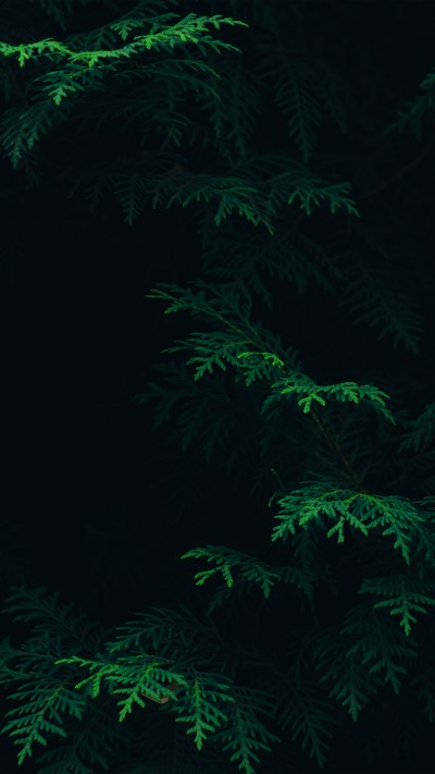 PAPERS.co   iPhone wallpaper   vs89-tree-leaf-green-pattern-nature-dark